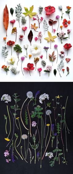 Colorful arrangements by Ja Soon Kim // things organized neatly // nature // nature arrangements // rainbow nature