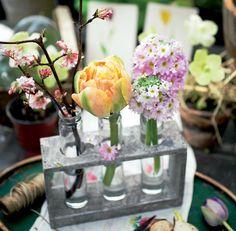 Kaikki tulppaaneista – Näin kasvatat ja hoidat