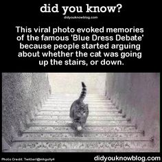 This viral photo evoked memories of the famous 'Blue Dress Debate' because people started arguing about whether the cat was going up the stairs, or down.  Source