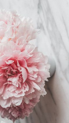 Flower Phone Wallpaper, Iphone Background Wallpaper, Gold Flowers, Beautiful Flowers, Cute Pink Background, Flower Aesthetic, Aesthetic Collage, Deco Floral, Colorful Wallpaper