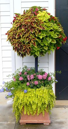 Double hanging baskets on pole in planter....