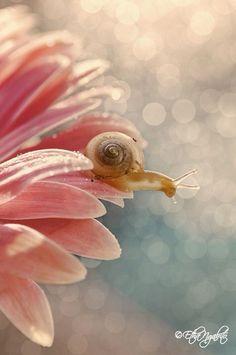 Fotografia a Snail de Etha Ngabito na Beautiful Creatures, Animals Beautiful, Beautiful Flowers, Beautiful Pictures, Animals And Pets, Cute Animals, Fotografia Macro, Bokeh Photography, Mundo Animal