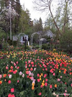 Nature Hd, Lifestyle, Garden, Plants, Summer, Garten, Summer Time, Lawn And Garden, Gardens