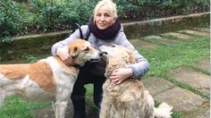 Sarah, one of the volunteers caring for abandoned animals, was shot in Istanbul! Find the responsible criminals!