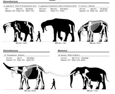 Reconstructions and size estimates for extinct elephants. From Larramendi, 2015.