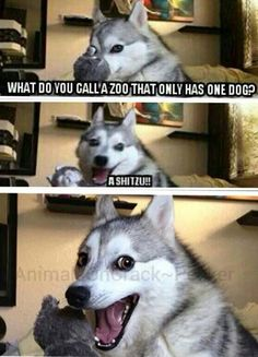 Some types of zoo's Some types of zoos – Funny Husky Meme – Funny Husky Quote – Some types of zoo's The post Some types of zoos appeared first on Gag Dad. Husky Jokes, Funny Husky Meme, Funny Animal Jokes, Dog Quotes Funny, Cute Funny Animals, Funny Animal Pictures, Pun Husky, Animal Humor, Sports Pictures