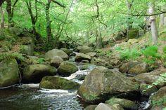 Padley Gorge River [Grindleford, UK]