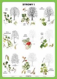 160 Nejlepsich Obrazku Z Nastenky Stromy Listy Gardens Nature A