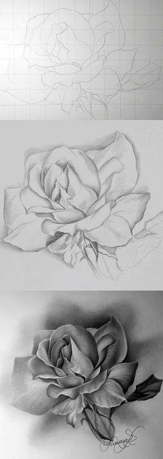 Růže  Růže