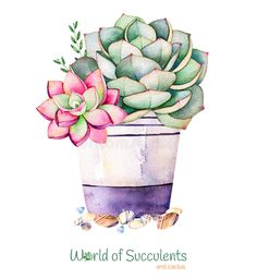 Watercolor handpainted succulent plant in pot and pebble stone.Watercolor clipartindividual flower pot isolated on white background.Perfect for your projectcoverwallpaperpatterngift paperwedding Succulents Drawing, Watercolor Succulents, Planting Succulents, Watercolor Flowers, Watercolor Cards, Watercolor Background, Watercolor Paintings, Cactus Painting, Cactus Art