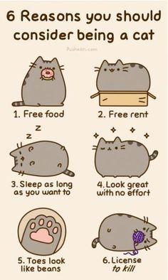 be a cat.