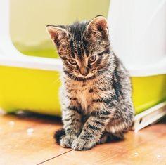 É fundamental manter a caixa de areia do gato limpa e cheirosa e, para isso existem alguns truques! #gatos #animais #caixaareia #animals #cats