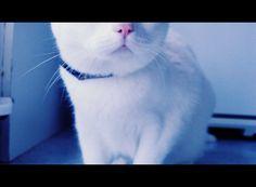 #cat #morfeo #meww