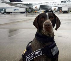 TSA Needs Families to Adopt Retired Bomb-Sniffing Dogs