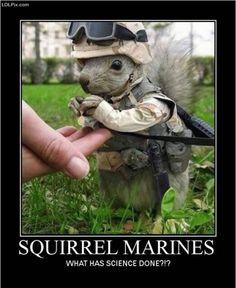 Badass squirrel