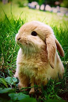 AHHhhhhhhhhhhhhhhhhhhhhhhhh!!! This #cute little #bunny sitting outside in a grass.
