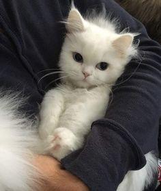 P.s I love u my cat ♥️                                                                                                                                                                                 More