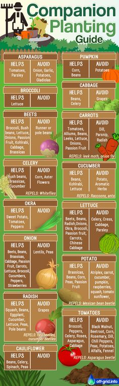 Companion Planting Guide – Pin, Share, Print Out – Off-Grid - Modern Garden Yard Ideas, Lawn And Garden, Gardening For Beginners, Gardening Tips, Companion Planting Guide, Vegetable Companion Planting, Vegetable Garden Design, Vegetable Gardening, Edible Garden