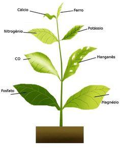 Sintomas da falta de nutrintes para suas plantas.