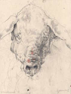 Frank Hoppmann. Portraits of Pigs on Behance