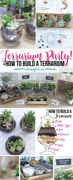out this Terrarium Party! Plus let your kids make a mess while learning… Check out this Terrarium Party! Plus let your kids make a mess while learning…Check out this Terrarium Party! Plus let your kids make a mess while learning… Decor Terrarium, Build A Terrarium, How To Make Terrariums, Succulent Terrarium Diy, Making A Terrarium, Glass Terrarium Ideas, Terranium Diy, Best Terrarium Plants, Terrarium Wedding
