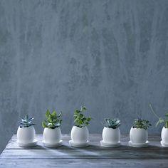 Wilham Ceramic Egg Plant Pot