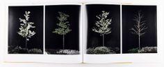 sophy rickett - twelve trees
