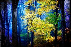 Fairytale in Blue and Yellow - Magical Woodland Photography - Autumn Trees - Misty Fog Art - Enchanted Forest