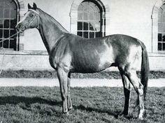 TB stallion Rantzau, sire of the legendary Cor De La Bryere