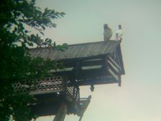 pair pigeons on their house #pigeonhouse #dovecote #kabootarghar #بيت_الحمامة #palomar