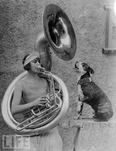 Viola Dana (Virginia Flugrath) w Tuba & Singing Boston Terrier Sousaphone, Boston Terrier Love, Boston Terriers, Foto Art, Black White, Vintage Dog, Pics Art, Life Magazine, Vintage Pictures