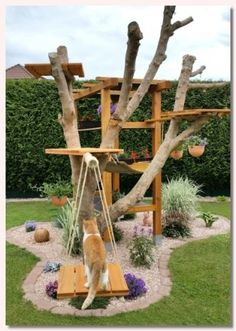 Katzenmöbel im Freien , The Effective Pictures We Offer You About Cat playground outdoor diy A quality picture can tell you many things. Diy Pour Chien, Outdoor Cat Tree, Outdoor Dog, Outdoor Cat Enclosure, Diy Cat Enclosure, Reptile Enclosure, Diy Cat Tree, Cat Run, Cat Playground