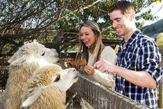 Llama Park Entry Tickets - Family Option!