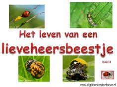 Powerpoint over het leven van lieveheersbeestjes. DEEL 2.  http://www.digibordonderbouw.nl/index.php/themas/dieren/lieveheersbeestjes/viewcategory/193