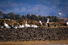 A group of many birds on the rocks of the shore of a river