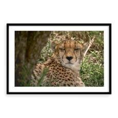 design templates Animal Decor, Design Templates, Framed Art Prints, Cheetah, Wall Art, Unique, Travel, Animals, Cheetah Animal