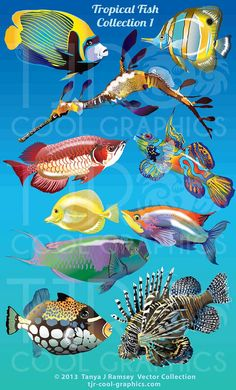Tropical Fish Collection 1  Vector Clip Art by CleverVectors, $3.95