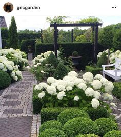 garden planning ideas for disney Back Gardens, Small Gardens, Outdoor Gardens, Hortensia Hydrangea, Hydrangea Garden, Hydrangeas, Outdoor Landscaping, Front Yard Landscaping, Boxwood Garden