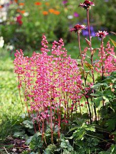 Coral Bells Garden Yard Ideas, Lawn And Garden, Garden Projects, Garden Edging, Garden Tips, Shade Garden, Garden Plants, Short Plants, Coral Bells