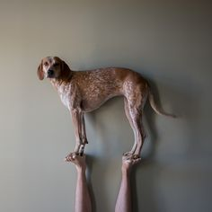 Dogs can do acro yoga, too! In Photographs: A Charming Rescued Dog That Balances On Things - DesignTAXI.com