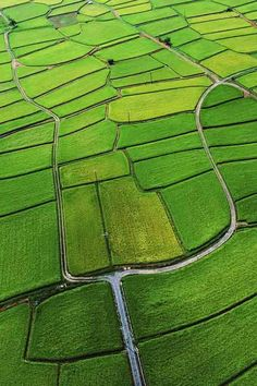 The Green Rice Fields Of The Low Altitude Aerial Mac Os 2048 x 2048 iPod 3 wallpapers, backgrounds