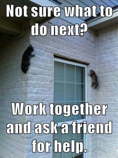 Growth Mindset Memes: English: Work together and ask a friend for help.