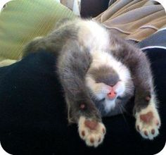 18 kittens who are too tired to stay awake :)