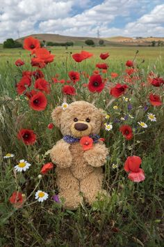 Teddy Bear Cartoon, Cute Teddy Bears, Cute Cartoon, Bear Wallpaper, Animal Wallpaper, Pattern Wallpaper, Teddy Photos, Teddy Bear Pictures, Teddy Hermann