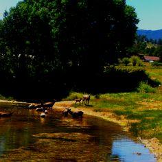 Elk Estes Park Colorado Camping
