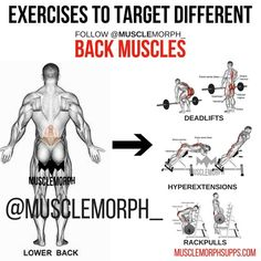 54 Best Muscle morph workouts images in 2019