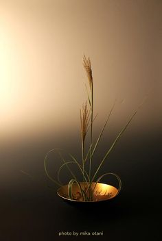 Ikebana by Mika OTANI, Japan. how such a humble grasses can create a beautiful silhouette