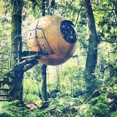 Reminiscing about the amazing time we spent sleeping in a sphere; swaying in the trees #freespiritspheres #vancouverisland #sphere #treehouse #bliss #forest
