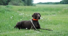 The 5 behaviors your hunting dog should have down before they go out in the field with you.