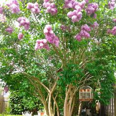 The scent of Sering, great gift of nature. #littletree #garden #gardening #sering
